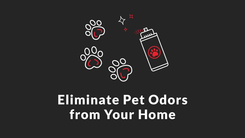 Eliminate pet odors from your home